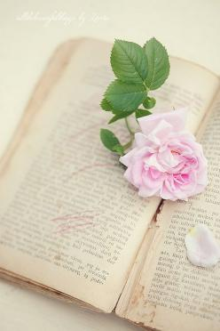 Rose Love by loretoidas, via Flickr: Vintage Books, Pink Flowers, Awww Books, Roses, Books Books, Beautiful Flowers, Old Books, Artsy Books