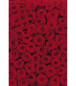 Roses Wall Mural: Wall Art, Colour, Roses Roses, Beautiful Roses, Wall Murals, Beautiful Flowers, Roses Wall, Roses Photomural, 4 077 Roses