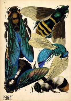 Séguy… is best remembered for a… series of prints he produced in the 1920s - 'Papillons' and 'Insectes'… The wonderfully lush and vibrant colours… come from the multiple-stencil technique of pochoir printing, usually associated with the Art Nouveau and Ar