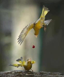 Sharing and caring! Two birds coupled heralds good fortune in partnership and lasting love. Great symbol.: Photos, Animals, Nature, Creature, Awesome, Catch, Beautiful Birds, Photography