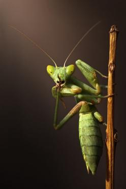 Shhhh...(if a pray mantis did this to me I'd definitely keep quiet): Animals, I M, Nature, Bugs Life, Insects, Shhh, Photo, Praying Mantis