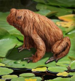 Siberian Long Haired Frog - Worth1000 Contests: Chewbacca S Frog, Worth1000, Haired Frog, Frog Haha, Frog 1024X2000, Frogs Frogs Frogs, Siberian Long