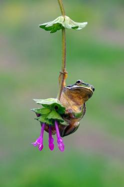 ❥‿↗⁀simply-beautiful-world Hang in there baby!      hip hop instrumentals updated daily => http://www.beatzbylekz.ca: Animals, Nature, Creatures, Frogs, Shaded Swing, Photo, Hang In There