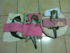 Sleep!: Cats, Animals, So Cute, Pet, Funny, Kittens, Day, Kitty