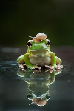 Snail and Frog by Naa Bolang LOOK IN ALEHPINKK http://www.pinterest.com/Alehpinkk/: Snails, Animals, Nature, Friendship, Frogs, Photo, Has, Naa Bolang