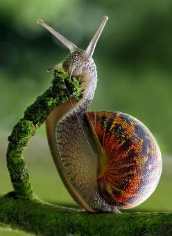 snail: Snails, Macro, Animals, Nature, Beautiful, Creatures, Photography