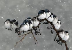 Snow babies!  http://s3-ec.buzzfed.com/static/enhanced/web04/2012/5/8/12/enhanced-buzz-31217-1336495947-1.jpg: Animals, Winter, Nature, Snow, Photo, Birds