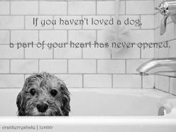 so.true.: Fur Baby Quotes, Dog Love Quote, Puppy Love Quotes, Animal Love Quotes, Quotes Dog, Puppy Dog Quotes, Dogs Quotes Love, Puppy Quotes Love, A Dogs Love Quotes