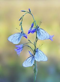 Source: 500px.com  Almost too pretty, but stunning nonetheless: Beautiful Butterflies, Blue Butterflies, Animals, Blue Butterfly, Nature, Flutterby, Flowers, Photo, Mauro Maione