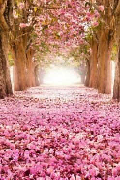 # Spring Reminder! Pretty Pink Shades!: Nature, Tree, Beautiful, Pink, Places, Flowers, Garden