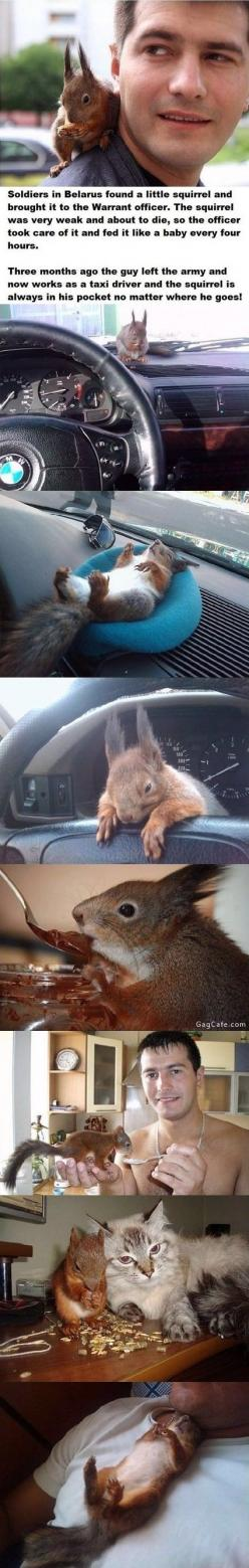 Squirrel best friend cab soldier. Oh my gosh that squirrel is so cute!: Animals, Cat, Soldiers, Sweet, Squirrels, Baby Squirrel, Pet Squirrel, Pets
