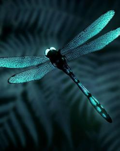 Ssss!...Uhm, This Is Really Attractive...Samissomar's Pinterests Are So Peaceful !... http://samissomarspace.wordpress.com: Butterflies Dragonflies, Blue Dragonfly, Dragon Flies, Teal Dragonfly, Color, Dragonfly S, Animal