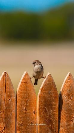 Strech on the fence: Fence, Animals, The Splits, Nature, Little Birds, Funny, Funnies, Photo