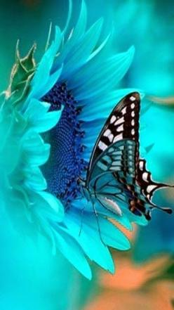 Stunning: Beautiful Butterflies, Aquamarine Color, Tiffany Blue Flowers, Blue Butterfly, Stunning Blue, Flowers And Butterflies