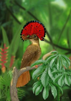 Stunning red feathers on this Royal Flycatcher. Nature is so cool.. Eat your heart out Lady GaGa!: Animals, Google, Royals, Nature, Poultry, Beautiful Birds, Amazonian Royal