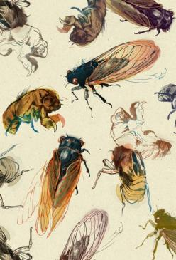 "Summer Cicadas by Teagan White  ""Some cicadas and their shell-pod-things that crunch crunch crunch under your shoes."" -White: Teaganwhite, Pattern, Summer Cicadas, Art Prints, Illustration, Teagan White, Summercicadas, Products"