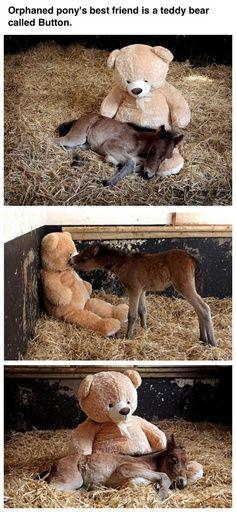super cute*I can't even comprehend how cute this is: Best Friends, Sweet, Teddybear, Teddy Bears, Orphaned Pony, Animal, Foal
