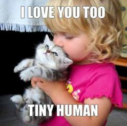 Super funny animals | Awesomely Cute, Cute Kittens, Cute Puppies, Cute Animals, Cute Babies and Cute Things in General: Cats, Animals, Kitten, Sweet, Love You, Pet, Tiny Human, Kitty