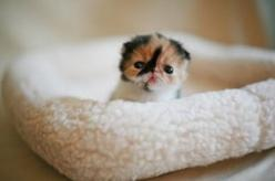teeny tiny things | Melting at the sight of cute things is instinctual; perusing glamour ...: Cats, Cuteness, Animals, Pets, Adorable, Kittens, Things, Baby, Kitty