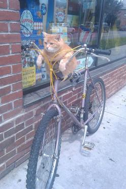 "( =^..^=Thanks, Pinterest Pinners, for stopping by, viewing, re-pinning, & following my boards.  Have a beautiful day! ^..^ and ""Feel free to share on Pinterest ^..^   #catsandme #cats #doghealthcareblog: Cats, Bicycles, Animals, Bike, Funny Cat, Pet,"