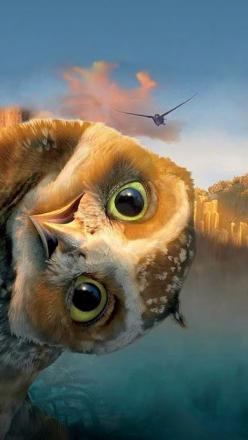That's Digger from the movie Legends of the guardians: Owls of GA'Hoole.  Fantastic animated movie!! Must see: Animals, Funny, Movie, Birds, Peek A Boo, Owls