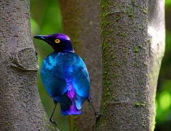 The absolute perfect color mix.: Animals, Nature, Color, Beautiful Birds, Purple Glossy