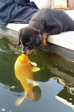 The Best Kiss Ever: Animals, Friends, Dogs, Protective Dog, Pets, Puppys, Fish Kiss, Photo