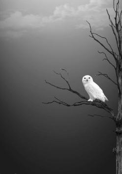 """The crow wished everything was black, the owl, that every thing was white.""     ""El cuervo quisiera que todo era negro, el búho, que todo fuese blanco.""    Esto esta genial    Pinterest.Connection( Photo, GrayScale );: Picture, Animals, Art, Whit"