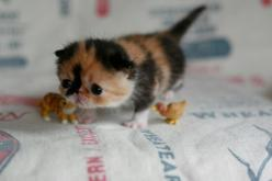 The Cutest Kitten In The World: Cats, So Cute, Pets, Adorable, Baby Animals, Things, Kittens, Kitty