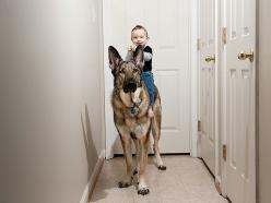 The Cutest Thing You'll See Today: 22 Kids and Their Big Dogs: Photos, Babies, Animals, Friends, Funny, Children, German Shepherds, Kids, Big Dogs
