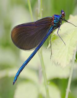 The dragonfly, in almost every part of the world symbolizes change and change in the perspective of self realization; and the kind of change that has its source in mental and emotional maturity and the understanding of the deeper meaning of life.: Blue Dr