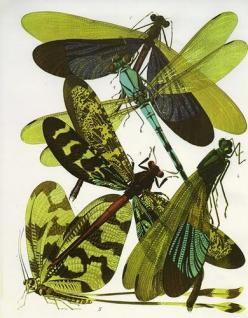 The Insectes, set of 20 remarkable insect prints produced in Paris by the French designer Eugene Alain Séguy circa 1928.: Scientific Illustration, Inspiration, Illustrations, Art, Insects, Botanical, Dragonfly, Dragonflies