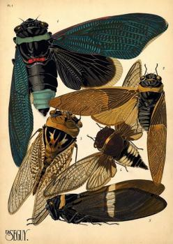 The latest gossip on insect art - but does it float? http://butdoesitfloat.com/The-latest-gossip-on-insect-art: Scientific Illustration, Inspiration, Bugs, Illustrations, Art, Botanical, Insects