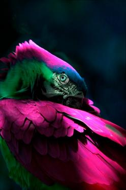 The Parrot | Amazing Pictures - Amazing Pictures, Images, Photography from Travels All Aronud the World: Animals, Nature, Amazing Pictures, Beautiful Colors, Pretty Boy, Parrots, Beautiful Birds