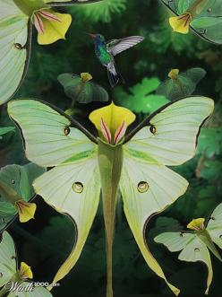 the pitcher plant - looks like a butterfly!: Butterfly, Garden Ideas, Butterflies, Pitcher Plants, Flowers Plants, Outdoor, Beautiful Flowers, Flowers Garden