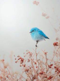 The plain, dull background behind the bird makes the photo simple and draws attention to the blue bird.: Bluebirds, Cute Bird, Animal Photography, Little Birds, Beautiful Birds, Blue Bird Art