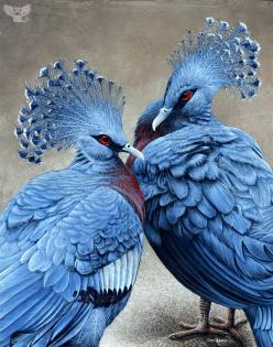 The Victorian Crowned Pigeon is an unusual bird; it's elegant, brightly colored, and the largest surviving pigeon on earth. It's actually endangered, seriously threatened by logging and illegal capture in its native land of New Guinea. Painting by