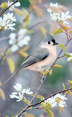 There's some interesting changes involving the #Twitter -- some good, some bad. Read more on how it can affect your business. #entrepreneur #socialmedia: Tufted Titmouse, Art, Beautiful Birds, Spring, Tuftedtitmouse, Bird Photography, Animal