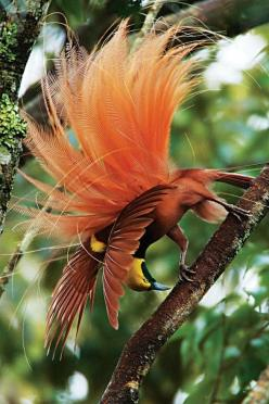 There was a Bird of paradise in Fulker's Hollow that had learned, somewhere, to mimic machinery. Hikers were sometimes startled, in mid-forest, to hear the rattle of a jackhammer, or a truck backing up...('Up Jumps the Devil,' bio of the Devil