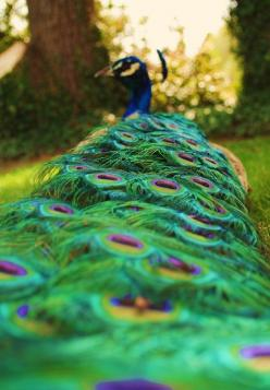 These colors remind me that God is grand.  Just imagine the mind that can make something this beautiful!: Peacock Feathers, Peacocks, Animals, Color, Birds, Photo, Beautiful Peacock