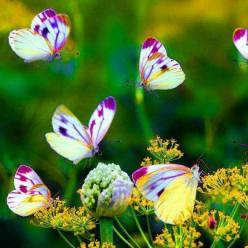 They remind me of the johnnie jump up flowers, adorable: Beautiful Butterflies, Fun Recipes, Nature, Garden, Flower, Animal
