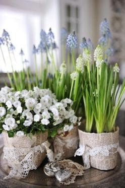 Think of the things that could be covered with burlap or printed paper to plant these bulbs in.: Spring Flowers, Ideas, Wedding, Gardening, You, Bulbs, Floral Arrangement, Newspaper