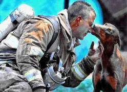 This firefighter saved this dog from a fire in her house, carrying her out and putting her in the front yard.  She's pregnant.  The firefighter continued to fight the fire.  He was afraid of her at first since he'd never been around a Doberman bef