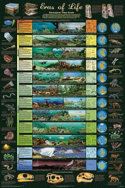 This geological time scale poster would serve as a good visual aid in the classroom. Students are also able to make geologic connections to the time scale.  #geologictimescale  #classroom #poster: Charts, Life Geology, Allposters Com, Educational Science,