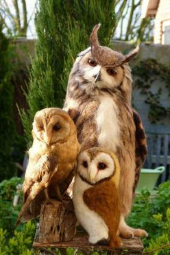 This is a really cute photo of some horned owls.  I don't know their proper names but it is a really nice photo.: Owl Family, Animals, Family Portraits, Beautiful, Families, Birds, Owls