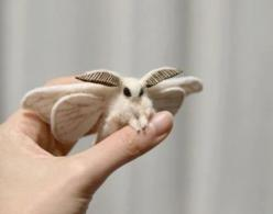 This is a Venezuelan Poodle Moth, these weren't even discovered until 2009.: Animals, Pokemon, Nature, Stuff, Creatures, Venezuelan Poodle Moth, Things