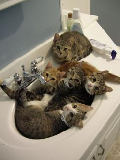 This is how my kitties looked when I first brought them inside (semi-feral mother), except my gang huddled around the toilet! They were so scared. And now? Spoiled rotten :): Cats, Kitten, Animals, Pet, Sinks, Crazy Cat, Kitty, Sink Full, Cat Lady