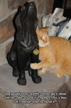This is one of the cutest and meaningful things ever! And people say cats don't care.: Cats, Animals, Statue, True Friends, Dogs, Sweet, Pet, Friends Forever, Collar