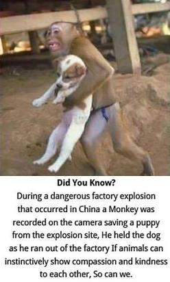 This is the most adorable thing in the entire world.: Animals, Dogs, Monkey Saves, Stuff, Pet, Puppys, Animal Rescue Quote, Things, Funny Animal