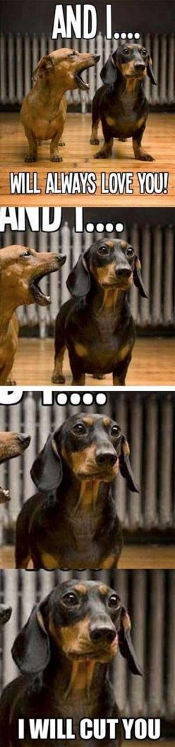 This made me LOL literally... I grabbed my mouth with laughter. So funny!: Dogs, Stuff, Dachshund, Doxie, Funnies, Funny Animal, So Funny